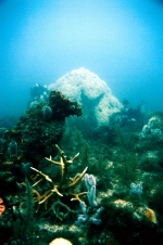 Photo of bleached coralhead