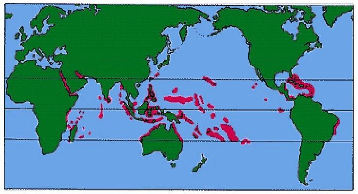 Коралловые рифы где находится